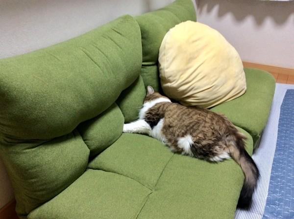 ニトリ ポケットコイル座椅子
